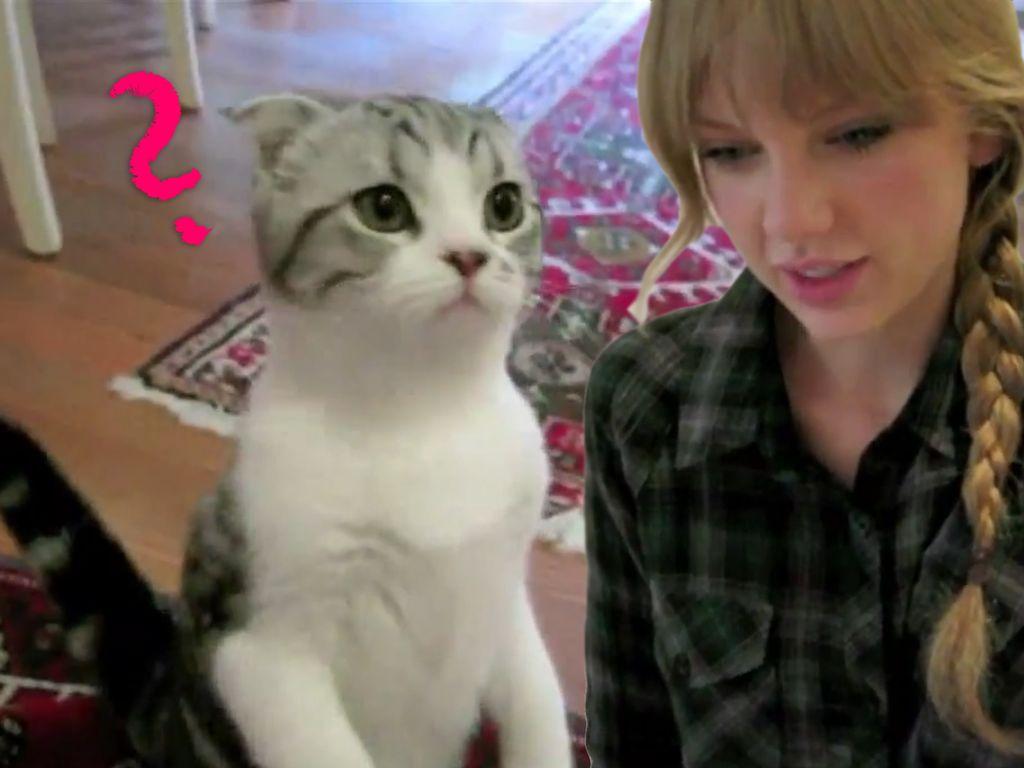 Taylor Swift und ihre Katze Meredith