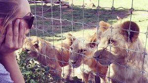 Kaley Cuoco mit kleinen Löwen