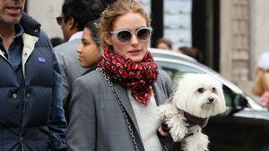 Olivia Palermo mit ihrem Hund auf dem Arm