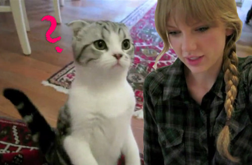 Taylor Swift gab ihrer Katze Meredith Nachhilfe