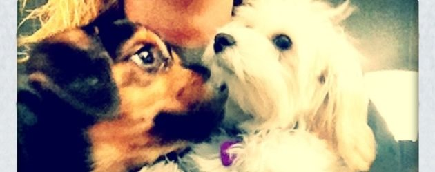 Miley Cyrus' Hündchen Happy mit einem anderen Hund