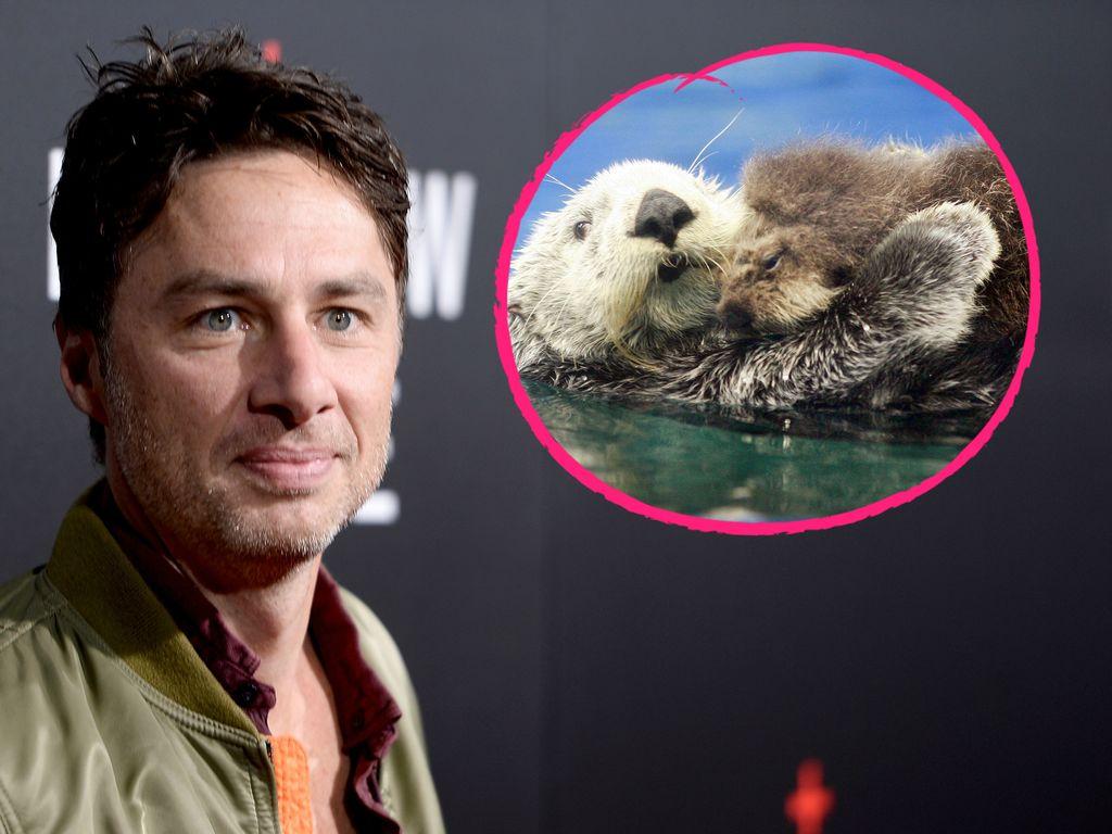 Hollywood-Star Zach Braff und ein Otter-Paar