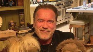 Arnold Schwarzenegger bleibt mit Mini-Pferd und Esel daheim
