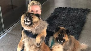 Nach Tod ihrer Vierbeiner: Chelsea Handler adoptiert 2 Hunde