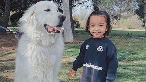 Hundeliebe: Goldige neue Schnappschüsse von Chicago West