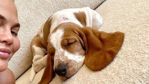 Nach Tod ihrer Bulldogge: Chrissy Teigen hat neuen Hund