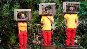 So schlägt sich neue Dschungel-Truppe bei der ersten Prüfung
