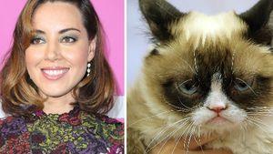 Dieser TV-Star spricht Grumpy Cat im Katzen-Film