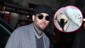 Chris Brown verklagt: Hat sein Hund eine Frau angegriffen?