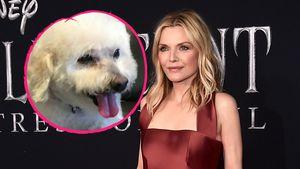 Michelle Pfeiffer trauert um ihren toten Hund Freddie
