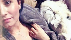 Gemütlich! Hier kuschelt Demi Lovato mit Wilmer