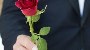 Der Bachelor: Diese drei Damen bekamen keine Rose