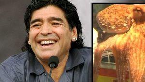 Kraken-Orakel Paul und Diego Maradona
