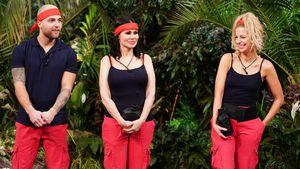 Zehnte Dschungelprüfung: So hat sich neues Trio geschlagen!