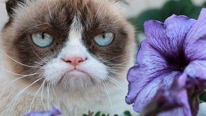"""""""Sie hasst es!"""" Grumpy Cat wird Film-Star"""