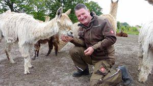 Ein Alpaka für 4.000 Euro: TV-Bauer Henry hat 50 davon!