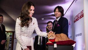 Weltberühmter Kater: Bob lernte sogar Herzogin Kate kennen!