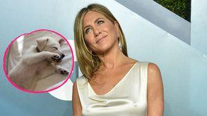 Dreifache Hundemama: Jennifer Aniston hat einen neuen Welpen
