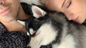 Joe Jonas & Sophie Turner trauern: Ihr Hund Waldo ist tot