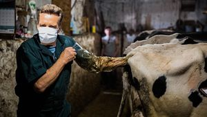 Mit Hand im Kuh-Hintern: Jürgen Milski wird jetzt Veterinär!