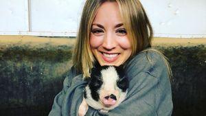 Nach Zwergpony-Tod: Kaley Cuoco hat zwei neue Mini-Schweine