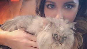 Schlafende Kate Beckinsale wird von ihrer Katze vollgepupst!