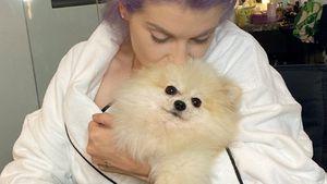 """""""Kaum geatmet"""": Kelly Osbourne bangt um ihren Hund Polly!"""