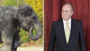 König Juan Carlos: Hüftbruch statt Elefantenjagd