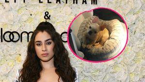 Fifth Harmony-Lauren trauert: Ihr Hund Gracie ist gestorben