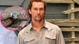 Matthew McConaughey beinah an Schlangen-Biss gestorben