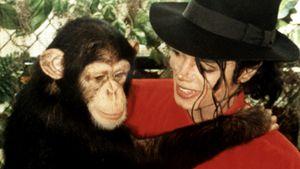 38 Jahre alt: So geht es Michael Jacksons Schimpansen heute
