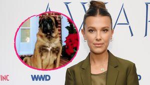 Millie Bobby Brown trauert um ihren geliebten Hund Dolly