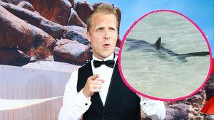 Oliver Pocher und Mallorca-Hai
