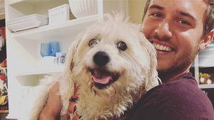 Nach Gesichts-OP: US-Bachelor Peter Weber lächelt wieder!