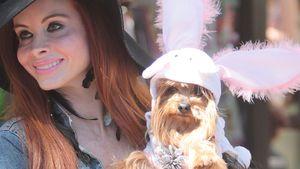Phoebe Price: Für Ostern wird ihr Hund zum Hasen