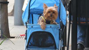 Phoebe Price: Geht ihre Hunde-Liebe zu weit?