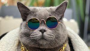 Misshandelt: Instagram-Katze Ponzu stirbt an Verletzungen