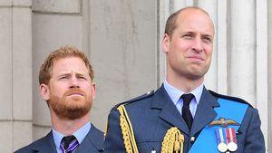 Diana-Statue: Harry und William bestehen auf getrennte Reden