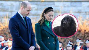 William und Kate trauern: Ihr geliebter Hund Lupo ist tot!
