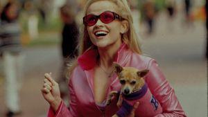 """Vor """"Natürlich blond 3"""": Es gibt eine Reunion des Filmcasts"""