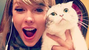 Taylor Swift mit ihrer Katze