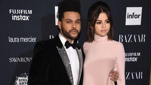 Öffentliche Schmuserei: Hier kuscheln Sel und The Weeknd!