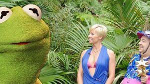 Würde Kermit der Frosch ins Dschungelcamp gehen?