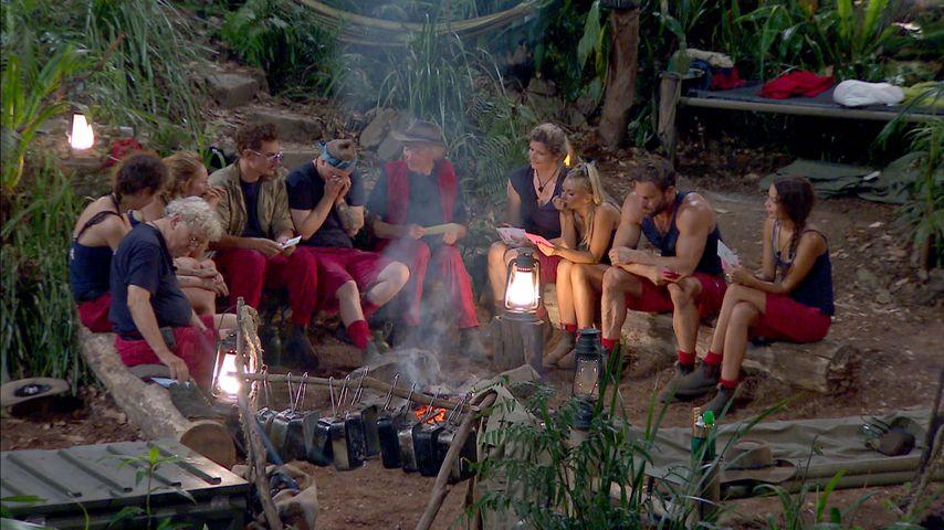 Staffel-Rekord: Dschungel holt Top-Quoten! Woran liegt's?