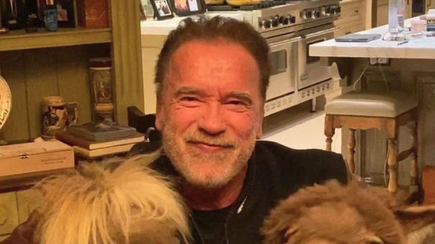 Arnold Schwarzenegger, sein Pferd Whiskey und sein Esel Lulu im März 2020