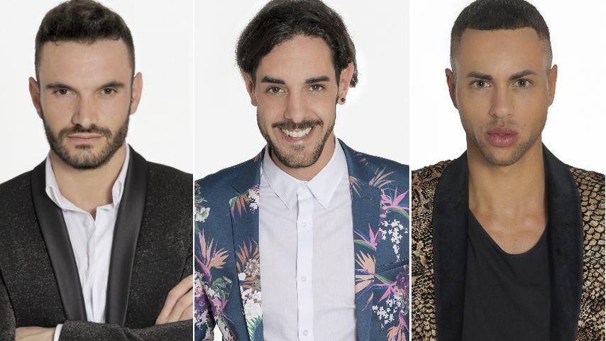 Top-5-Boys: Wer gewinnt das Herz der Schweizer Bachelorette?