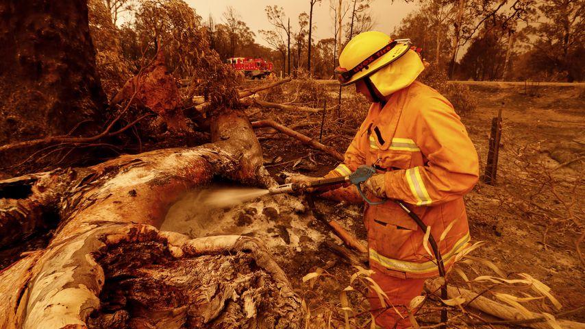 Buschbrände in Australien im Januar 2020
