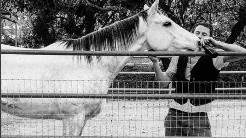 Bier-Buddys: Channing Tatum hat jetzt ein Gourmet-Pferd