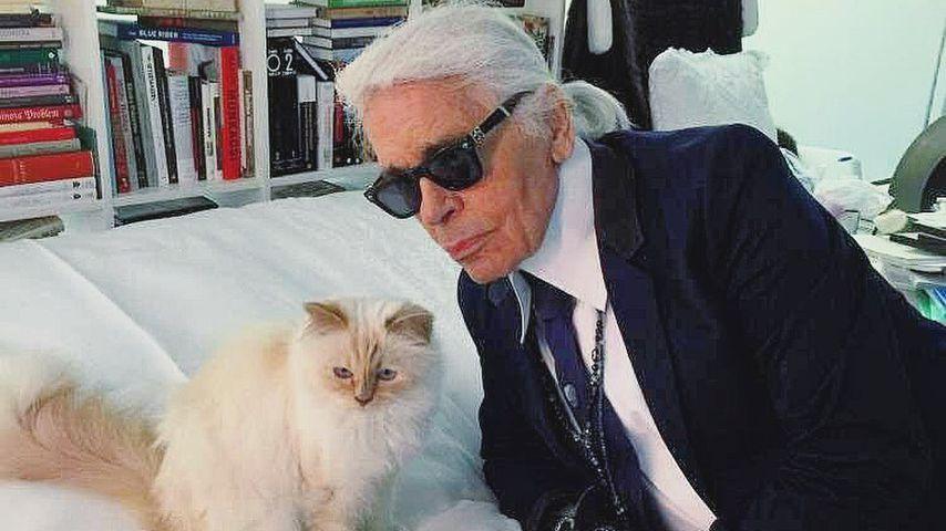 Choupette und Karl Lagerfeld
