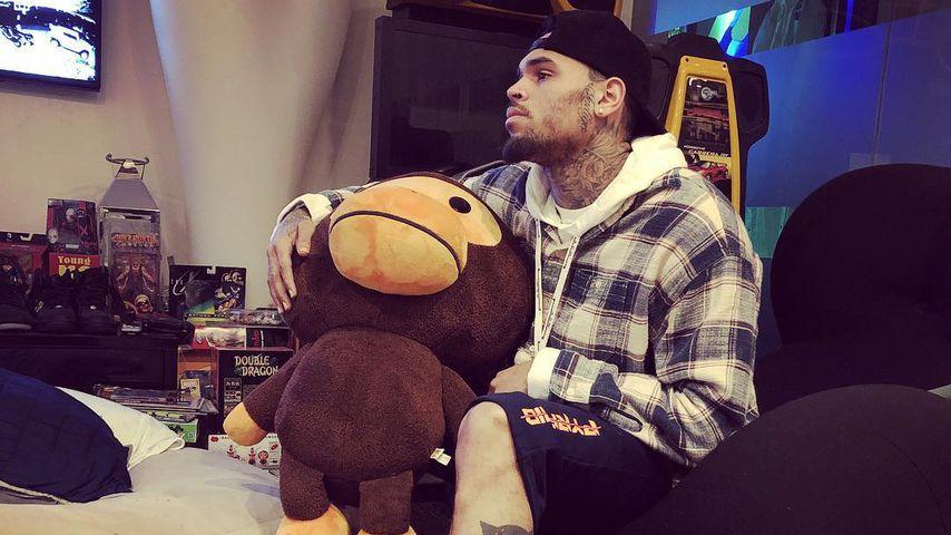 Halbes Jahr: Muss Chris Brown wegen eines Äffchens in Haft?